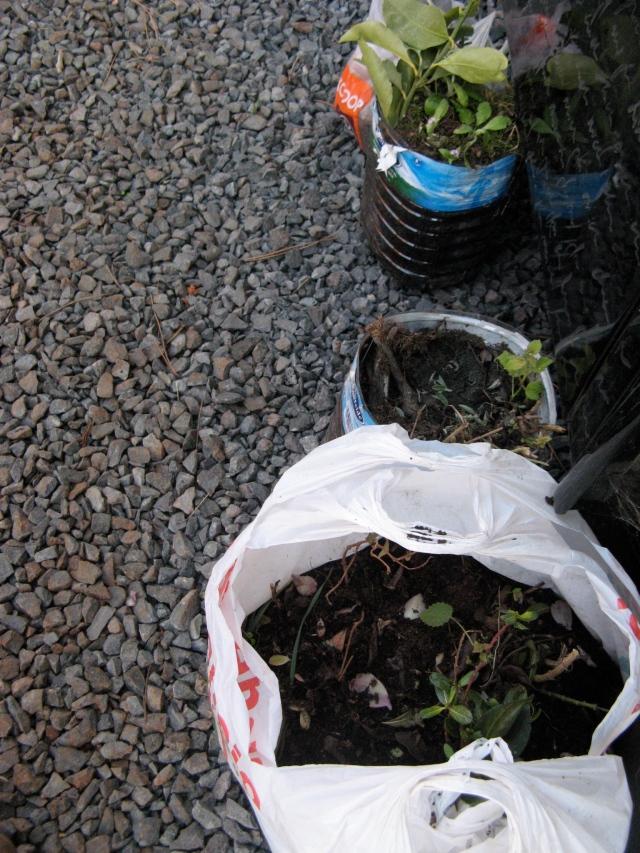 Rosliny przywiozlam z wyspy El Hierro