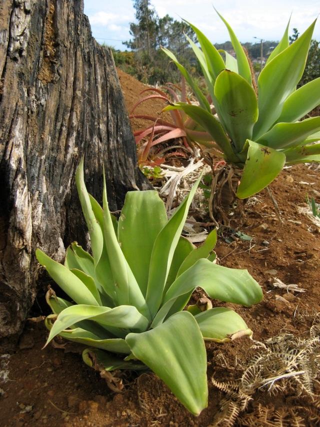 Tutejsza roslina - nie znam nazwy - obie znalezlismy bestialsko uciete, wyrzucone i wysuszone obok drogi.
