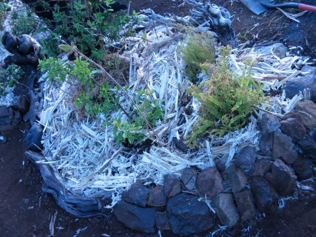 Ogrodek skalny - Magiczna Oaza wrozki Marii Bucardi