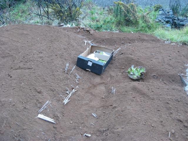 Sadzenie salaty - Magiczna Oaza wrozki Marii Bucardi jak zmienic pustynie w ogrod dla Matki Ziemi