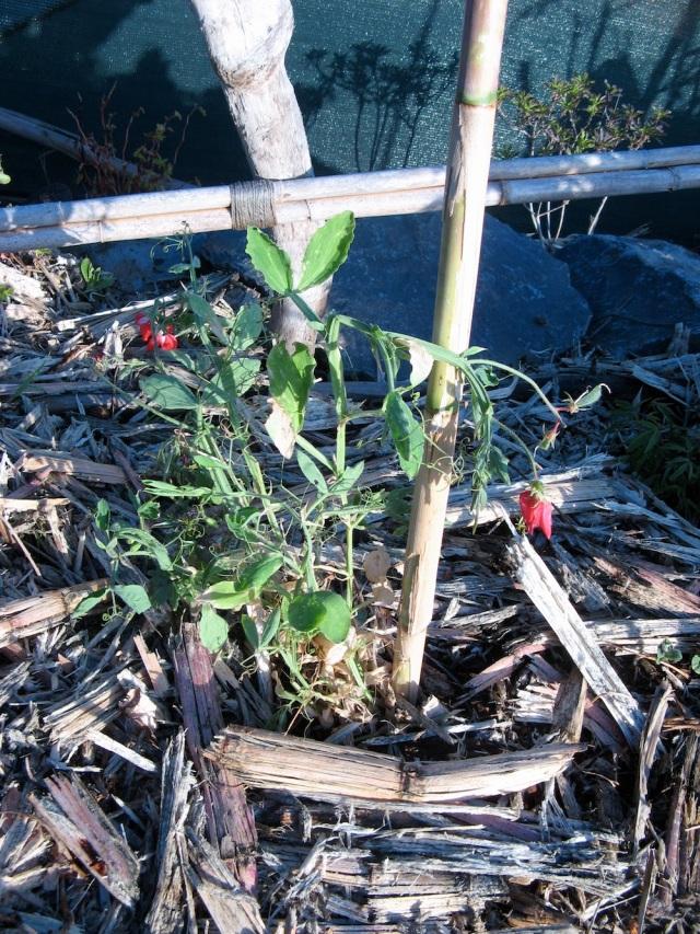 Magiczna Oaza wrozki Marii Bucardi jak zmienic pustynie w ogrod dla Matki Ziemi