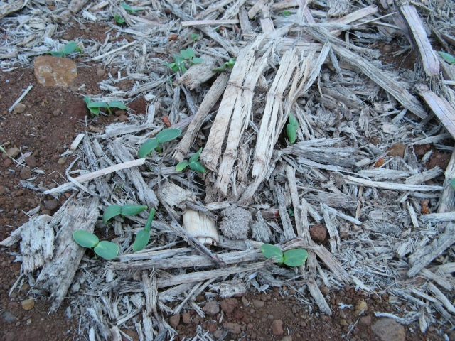 Kopce na rosliny jednoroczne - Magiczna Oaza wrozki Marii Bucardi