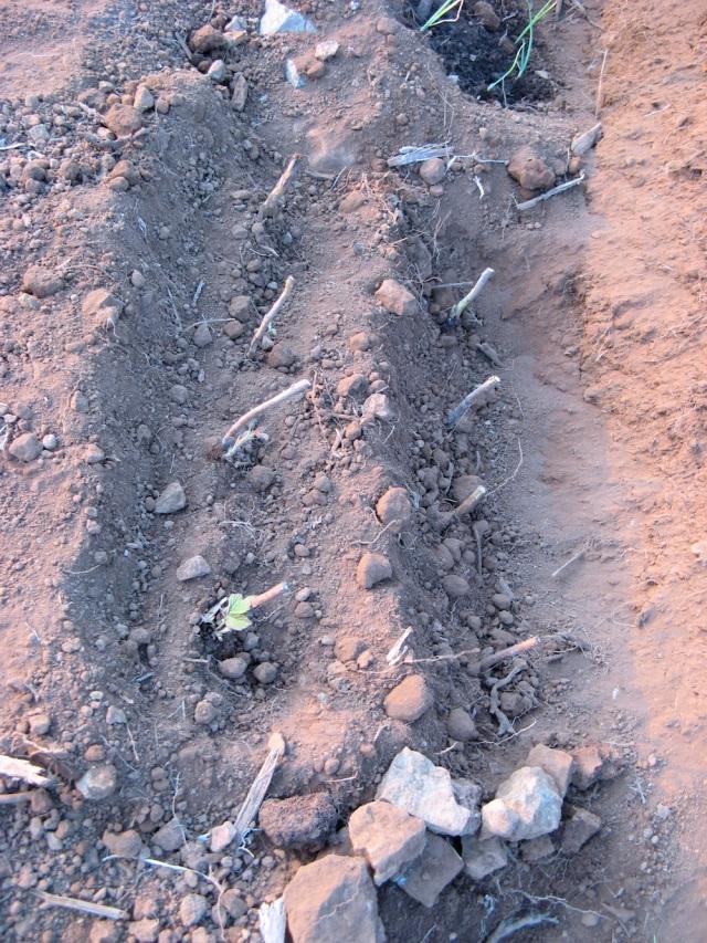 Maliny -  Magiczna Oaza wrozki Marii Bucardi jak zmienic pustynie w ogrod dla Matki Ziemi