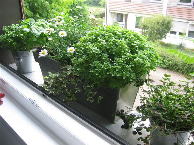 Permakultura Warzywa w miescie na balkonie tak, to mozliwe