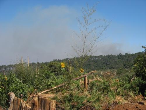 Pozar - Magiczna Oaza Ogrod Matki Ziemi blog Marii Bucardi