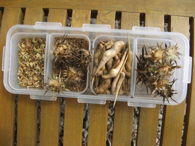 Zbiory nasion roslinek jednorocznych