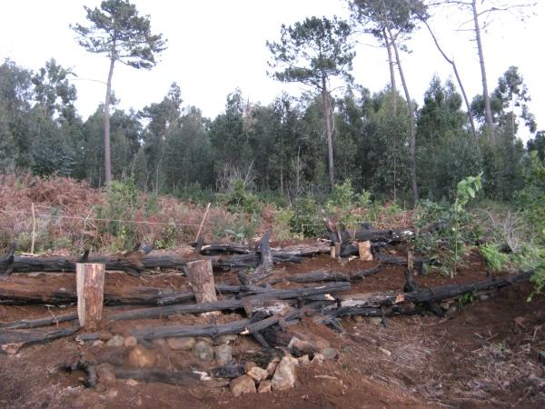 Madeira Dez.2012 019