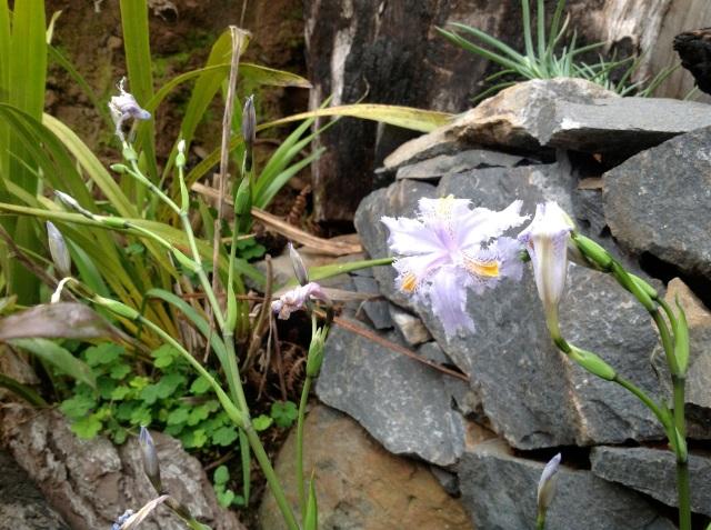 Magiczna Oaza inicjatywa Marii Bucardi - blekitna orchidea