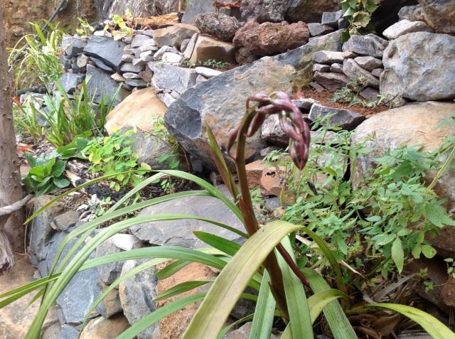 Magiczna Oaza inicjatywa Marii Bucardi - orchidea w paczkach