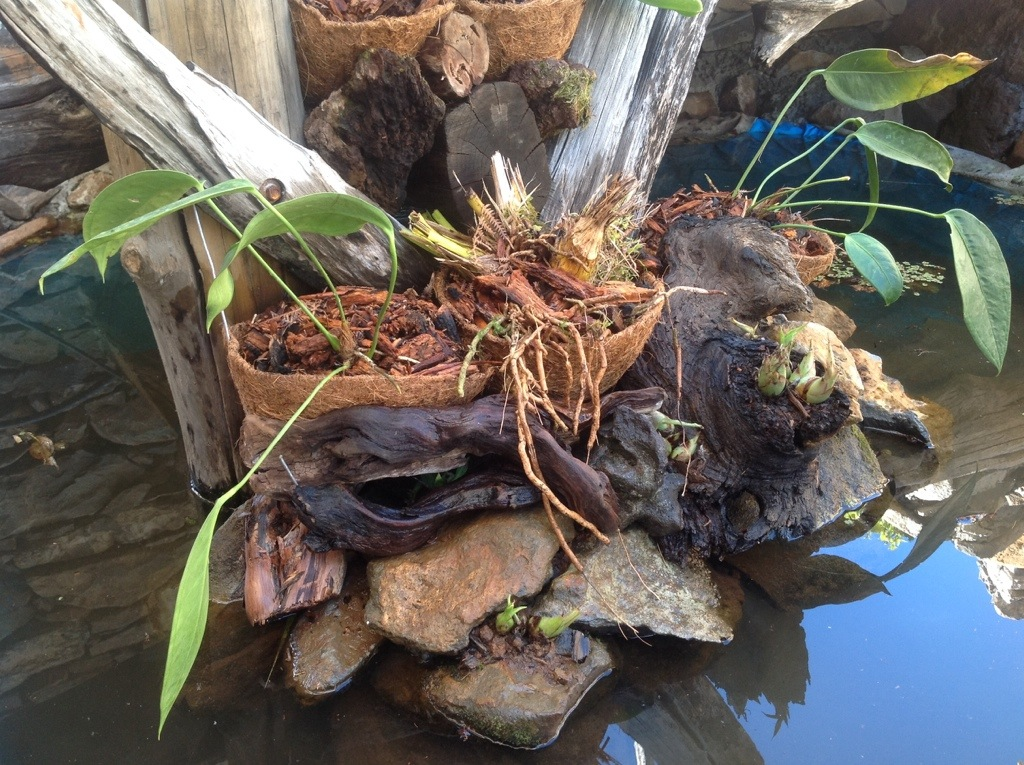wczoraj posadzone Anthurium i orchidee