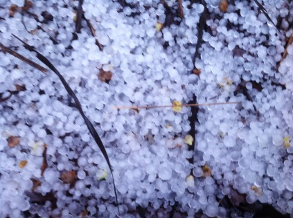 Zima w Magicznej Oazie